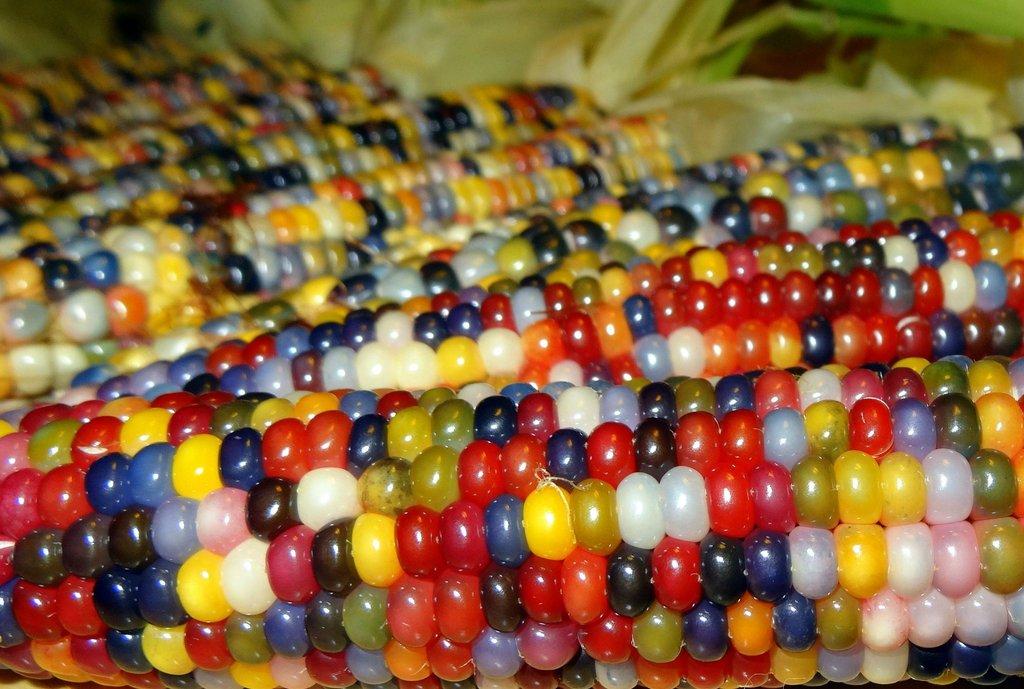 glass_gem_corn